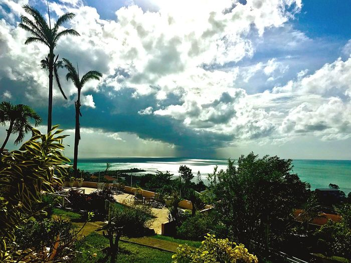 Sea Sky Horizon Over Water Cloud - Sky Tree Scenics Beauty In Nature Beach Water Palm Tree Day Outdoors Tranquil Scene Growth No People Tranquility EyeEm Gallery EyeEmNewHere EyeEmCaribbean JeanneRotaMatthews WeekOnEyeEm