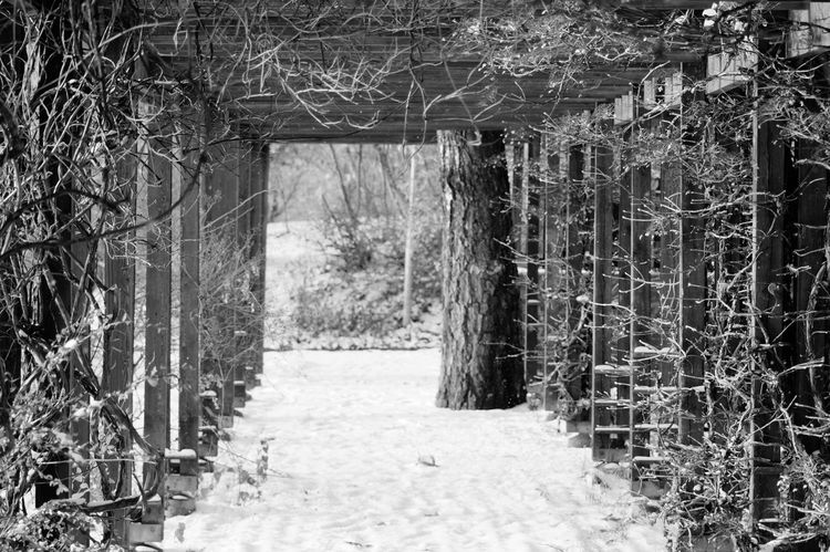 Showcase November Solna 2016 November Niklas Cold Temperature Sweden Beauty In Nature Nature Plant Winter Outdoors Architecture Swedish Nature The Secret Spaces The Architect - 2017 EyeEm Awards BYOPaper! Breathing Space EyeEm Selects The Week On EyeEm Been There. Perspectives On Nature Black And White Friday Shades Of Winter The Graphic City The Architect - 2018 EyeEm Awards