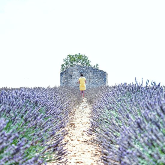 Outdoors Day No People Nature Flower Beauty In Nature Sky Pixelated Cyberspace Close-up Lavander Travel Destinations City Naturephotography Nature_perfection Nature Collection France France 🇫🇷 France🇫🇷 Valensole Beauty In Nature Landscape_Collection South Real People Landscape Photography