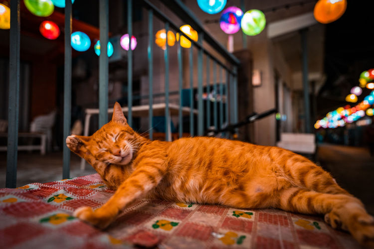 Cat lying down on table