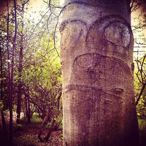 I See Faces (The Original) Hugging A Tree Nature I See Faces