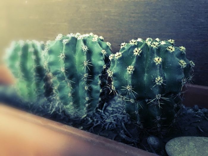 Cactuses🌵 WOW