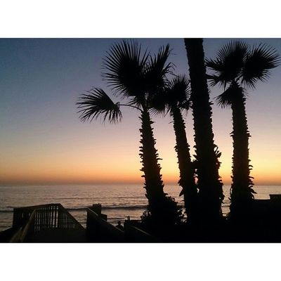 Get up. Morning Palmtrees Sun Colors GrindinMondayHaveARadDayOceansideIssoSexy