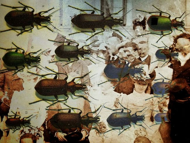 Backgrounds Full Frame No People Close-up Textured  Day Outdoors Abstract Art Science Surreal Surrealism Abstract Dreamscape Weird Strange Bizzare Unusual Insects  Creepy Oddities Curiosities