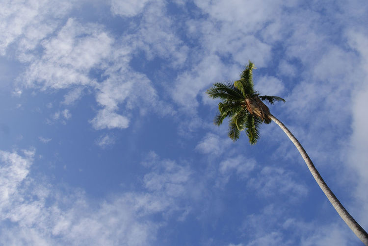 single coconut tree towards sky Beauty In Nature Close-up Cloud Cloud - Sky Cocunut Trees Day Growth Island Low Angle View Nature No People Outdoors Plant Single Coconut Tree Sky Summer Sunny Tranquility