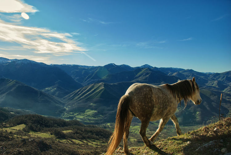 View of a wild horse on landscape against mountain range