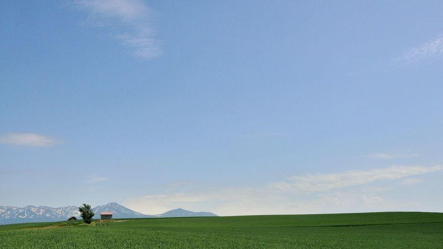 Idyllic Shot Of Green Rural Field Against Sky