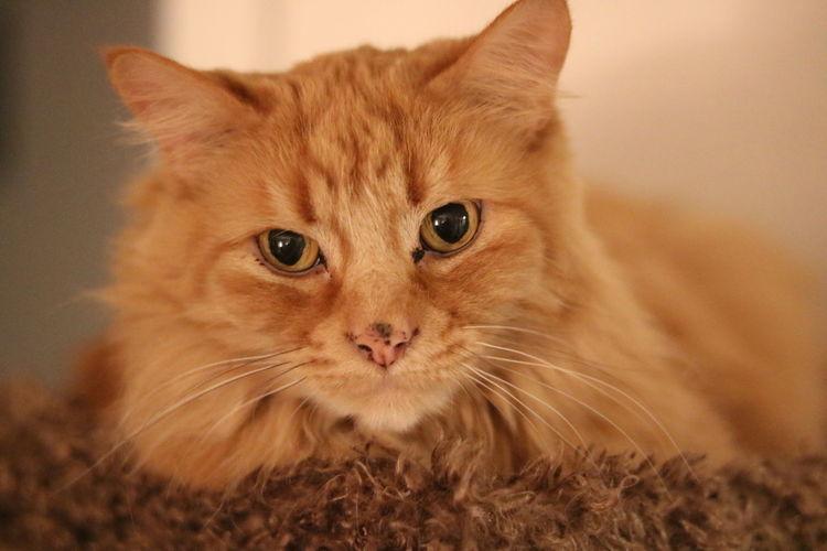 Meow - Fluffy