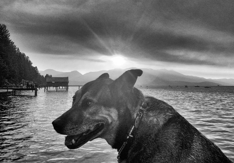 Dog in water against cloudy sky