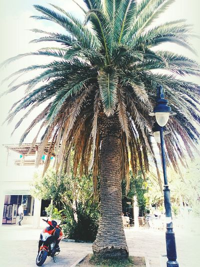 Palm Tree Holoday Montenegro Picture Photography