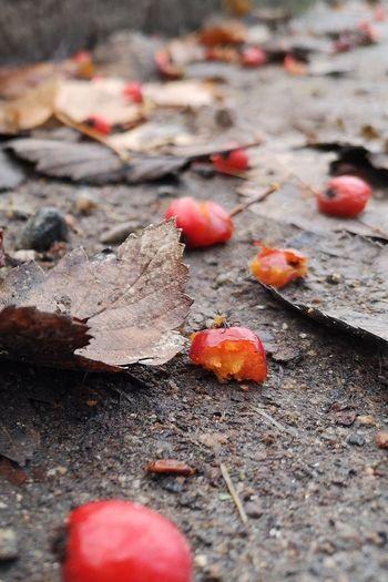 Red Leaf Autumn