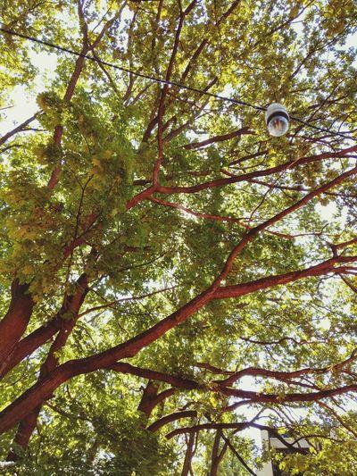 Tree Branch Full Frame Forest Leaf Sky Close-up