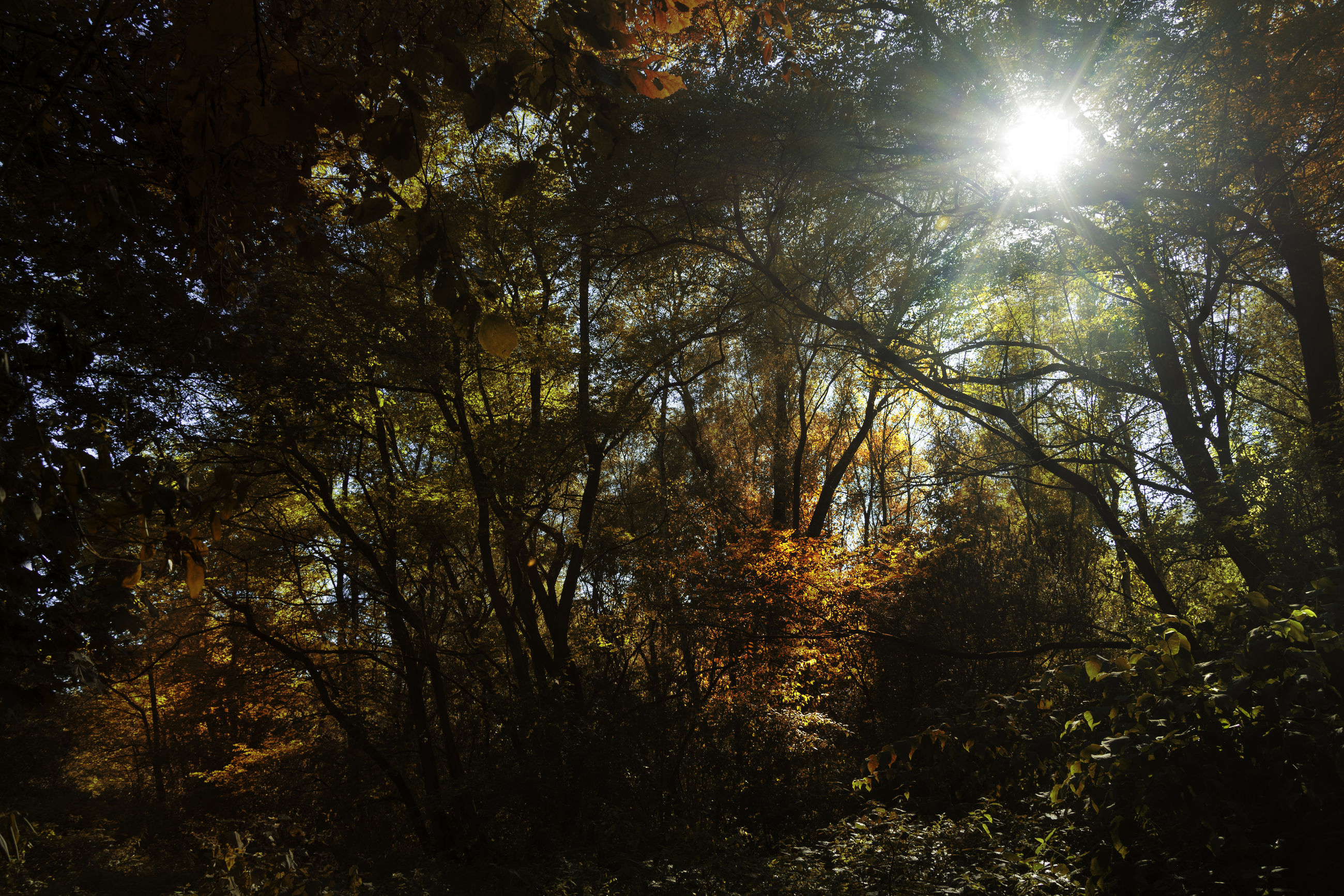 LOW ANGLE VIEW OF TREES AGAINST BRIGHT SUN IN FOREST