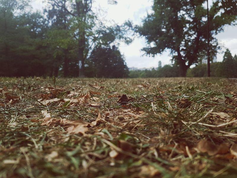 Park Nature Grass Leafes Trees