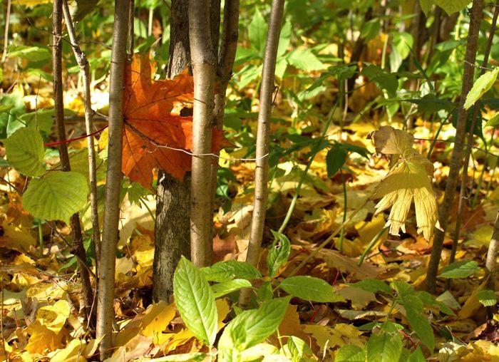 Лес Forest осень листья Nature листья желтые