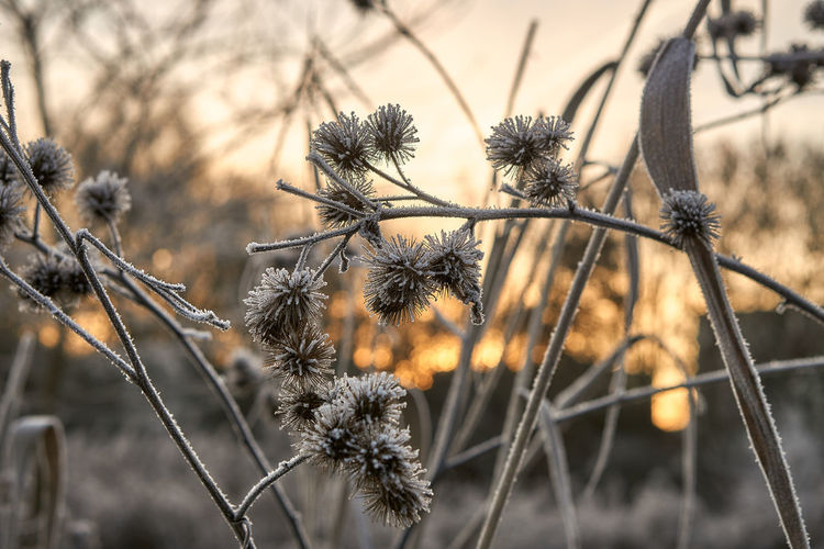 frosty sunrise Morning Sun Sunrise Bokeh Bokeh Lights Rural Scene Beauty In Nature Nature Landscape Winter Frozen Tranquility Tranquil Scene Sunrays Mood Lucky's Memories Lucky's Colors Colors Mood Light And Shadow darkness and light Light Branch Close-up Sky Plant Dead Plant