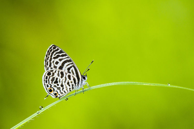 Animal Themes Animal Wildlife Animals In The Wild Beauty In Nature Butterfly - Insect Close-up Day Focus On Foreground Fragility Full Length Insect Leaf Nature No People One Animal Outdoors Perching Plant Spread Wings
