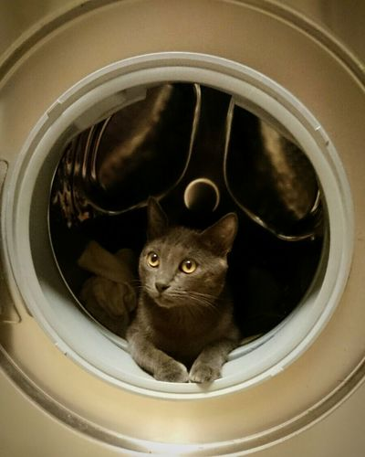 Cat No People Indoors  Washing Day Cat Pets Portrait Archival Domestic Cat