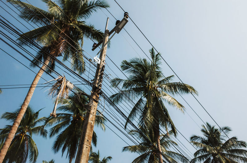 Electricity pylon and palm tress in Koh Tao, Thailand Thailand Sky Plant Low Angle View Tree Palm Tree Growth Tropical Climate Clear Sky No People Nature Tranquility Trunk Tree Trunk Beauty In Nature Day Tall - High Coconut Palm Tree Outdoors Tropical Tree Tranquil Scene Palm Leaf Electricity  Electricity Pylon Electric Cable Cable