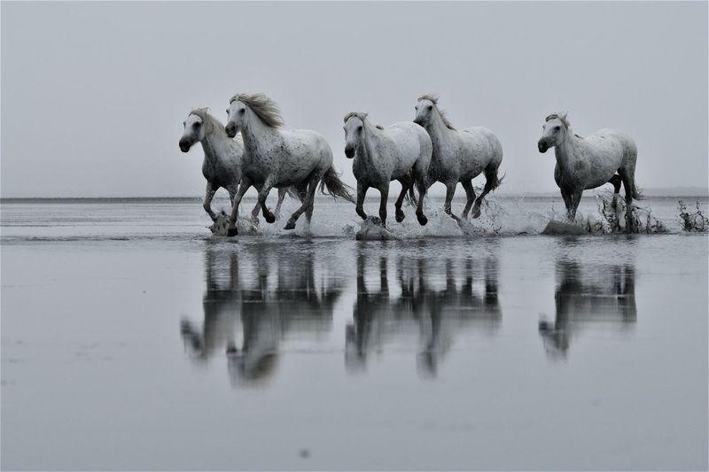 Horses running at beach against sky