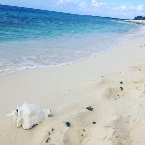 Picture perfect Turks And Caicos Seashell Sea Shell Shoreline Ocean Beach Land Sea Water Sand Sky Nature Beauty In Nature No People Relaxation