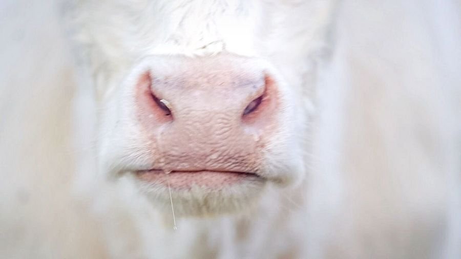 - M O O O - Enjoying The View Nose Animal Closeup Check This Out Taking Photos Minimalism EyeEm N \ VEA ★ CREME Learn & Shoot: Simplicity Pastel Power Nature's Diversities Fine Art Photography