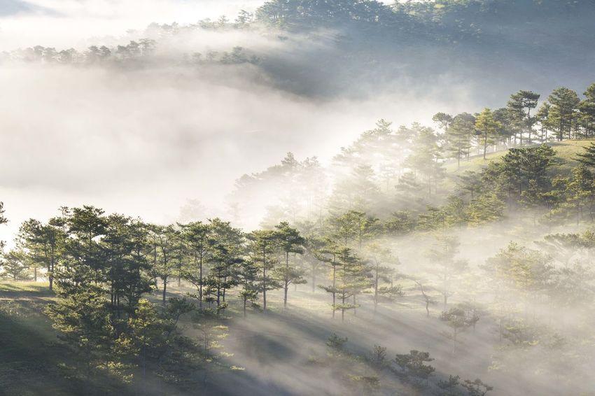 Rays throught. Fog Landscape Light Morning Nature Rays Sky Tree