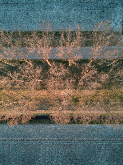 Trees in the countryside Abstract Beauty In Nature Copy Space Countryside Day Dike Drone  Farmland From Above  Lines Nature Netherlands No People Outdoors Scenics Sunset Tranquility Trees Water Winter Zeeland  Zeeuws Vlaanderen Flying High Abstract Photography EyeEm Best Shots The Great Outdoors - 2017 EyeEm Awards Lost In The Landscape Perspectives On Nature Shades Of Winter