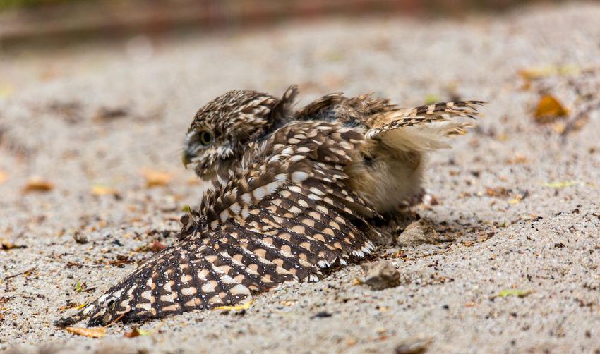 Close-up of bird on sand