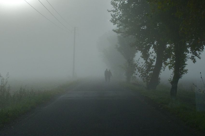 Beauty In Nature Day Fog Foggy Gelso Landscape Mulberry Nature Outdoors Road Scenics Spin The Way Forward Tree