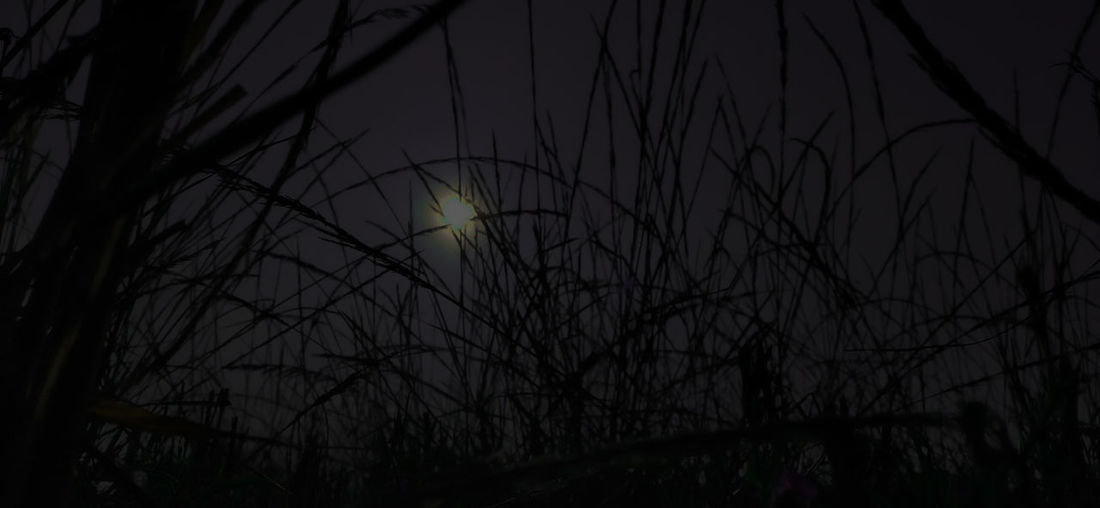 Low angle view of silhouette plants against sky at night