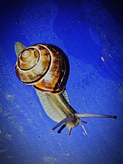 Wildlife Nature No People Gastropod Outdoors Animals In The Wild One Animal Day Blue Insect Close-up First Eyeem Photo