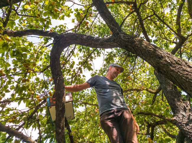 Man climbing on a tree.. Adult Adults Branch Climbing Day Fruit Healthy Hello World Summer Sunny Tree