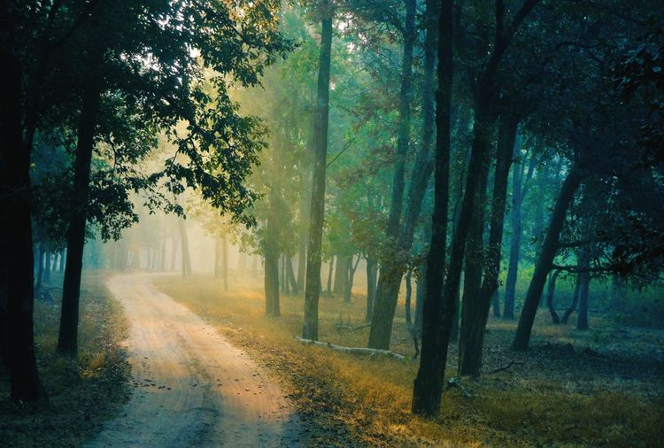 Sunbathed jungle road at pench, india
