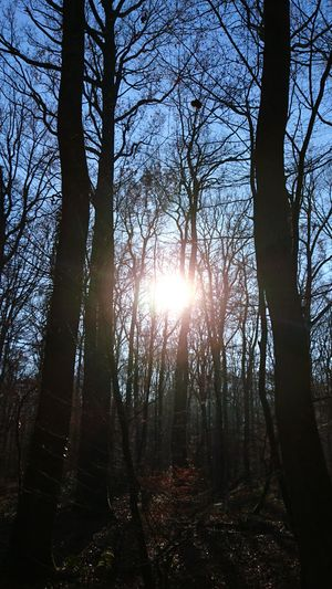 Eblouissant ! Tree Sunlight Nature Sky Sun Outdoors No People Beauty In Nature Tranquility Sunbeam Branch
