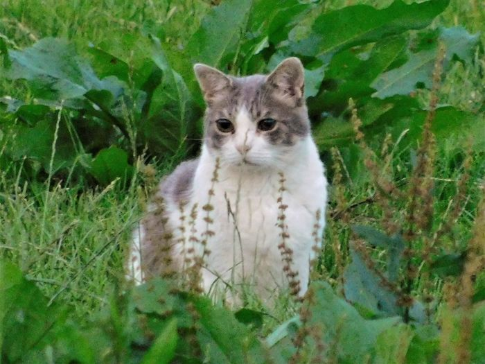 Portrait of cat on green plants