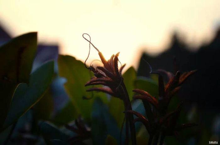 Sunset Flower Nature