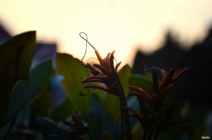 Nature Flower Sunset