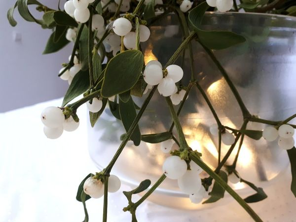 Mistletoe Fruit White Color Winter Christmas Decoration Close-up Plant Life Christmas Lights