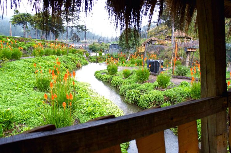 Magical landscape🦋🐞🐝🌷 Beauty In Nature Growth Plant Nature Green Color Outdoors No People Beauty In Nature Tourism Peruvian Nature EyeEmNewHere Travel Destinations Laviniafenton Cajamarca-Perú Granja Porcón Landscape