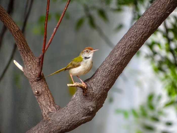 Close-up of a bird perching on tree