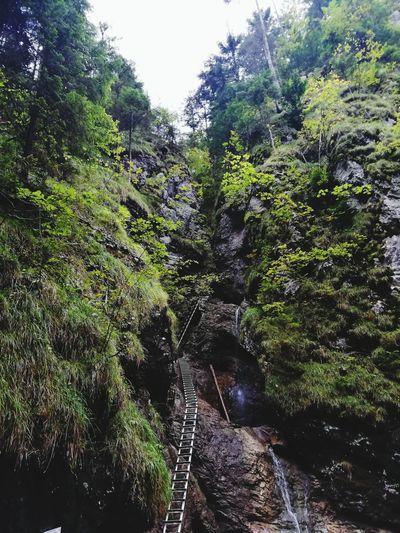 Mountain Ladder