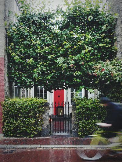 Red door Tree