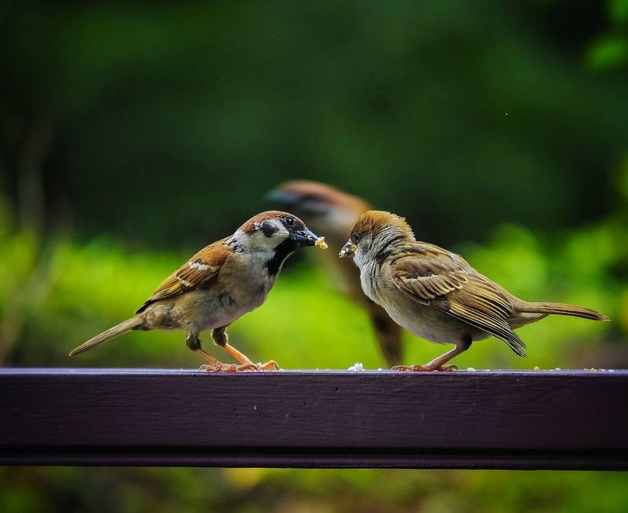 Feeding The Birds Mother Nature Mother And Child Cute Animals Nature On Your Doorstep Green Green Green!  A Moment Of Zen... EyeEm Nature Lover EyeEm Best Shots - Nature Animals In The Wild Birds Bird Photography Birds Of EyeEm  Birds🐦⛅ 💛💛💛✨✨✨ Nature's Diversities