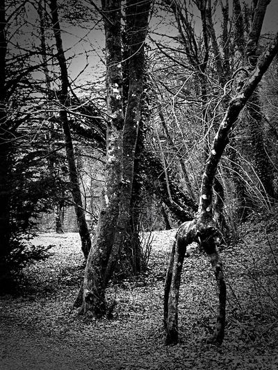 Formes Bnw_friday_eyeemchallenge Bnw_tree Bare Tree No People Outdoors Beauty In Nature Black And White Photography The Week On EyeEm Bnw_captures Blackandwhite Photography Tree