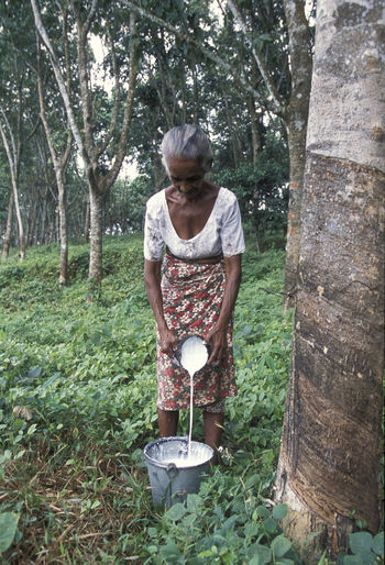 Woman pouring rubber sap from bowl in bucket at forest