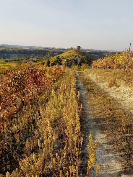Langhe Roero Tranquility Vineyards In Autumn Autumn Autumn Colors Beauty In Nature Hill Landscape Agriculture Rural Scene Outdoors Nature Day No People Sky Freshness