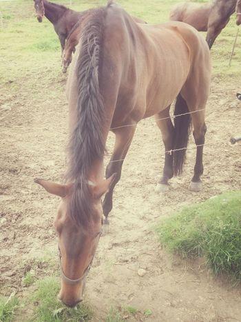 Horse I Love My Horse Horselove My Best Horse