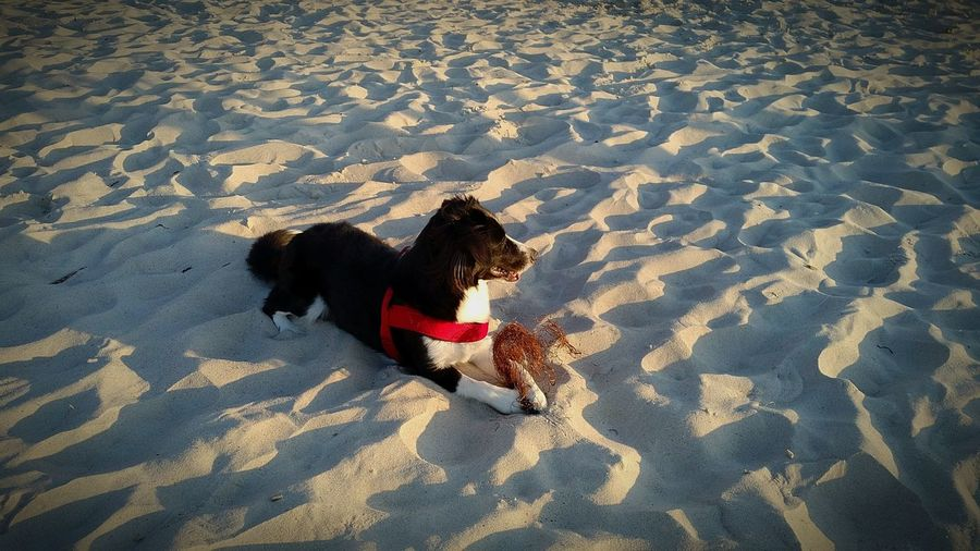 Doglife Dog