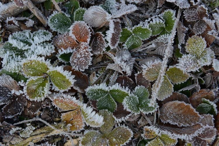 Beautiful icy
